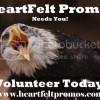 Do You Love Helping Authors? Volunteers Wanted!